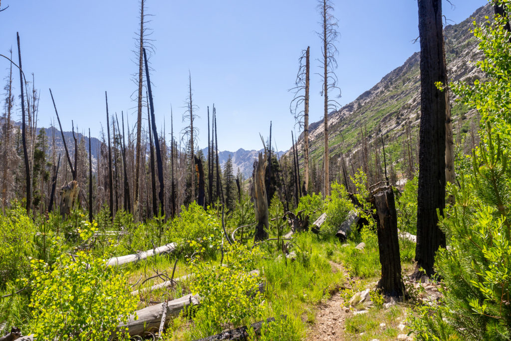 eine Burnt Area im Palisade Creek Valley