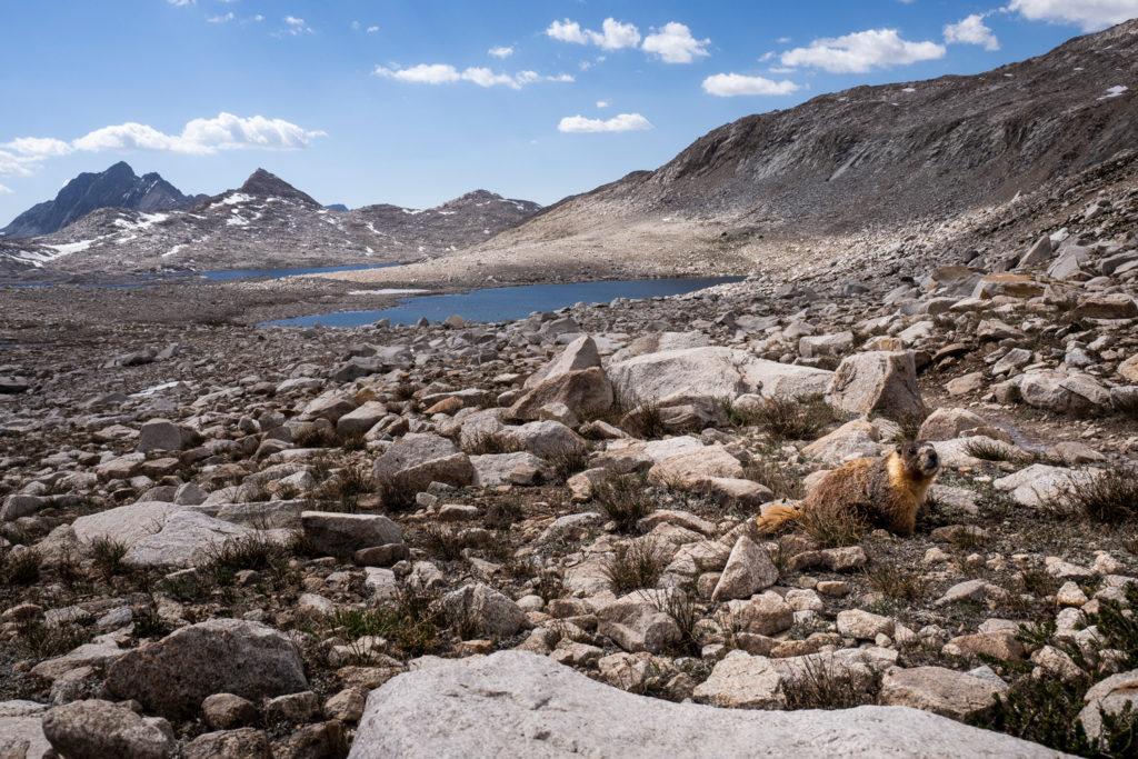 Ein Murmeltier vor dem Lake McDermand