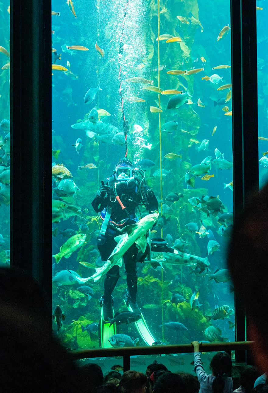 Das riesige Becken des Kelp Forest