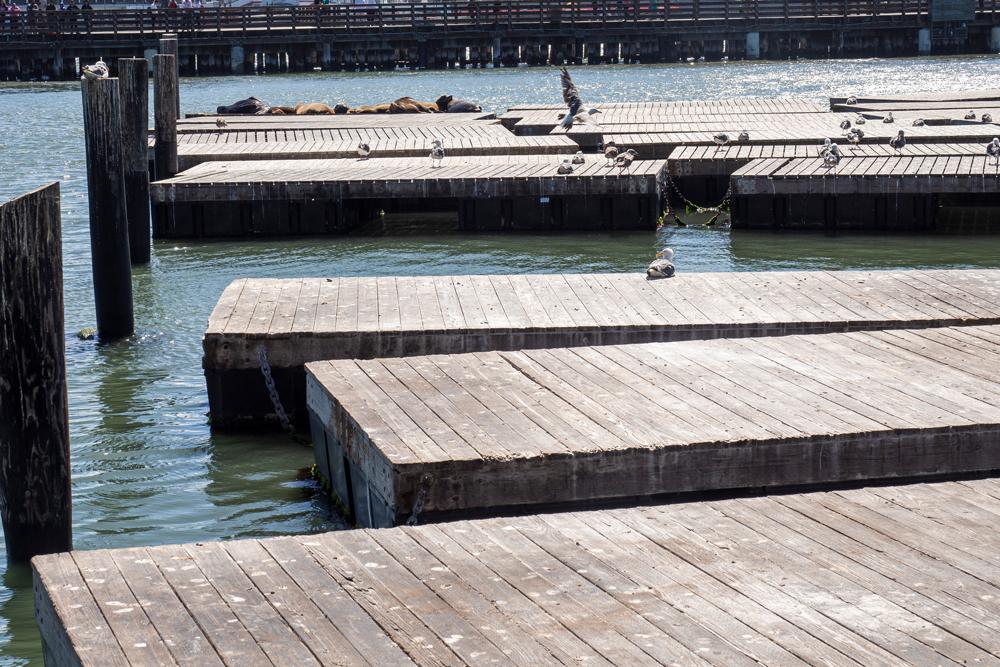 Weit und breit kein Seelöwe bei Pier 39 in San Francisco