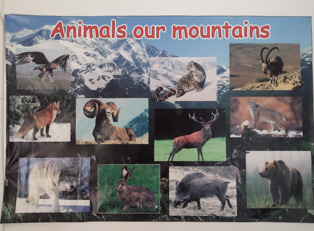 animals of kyrgyz mountains